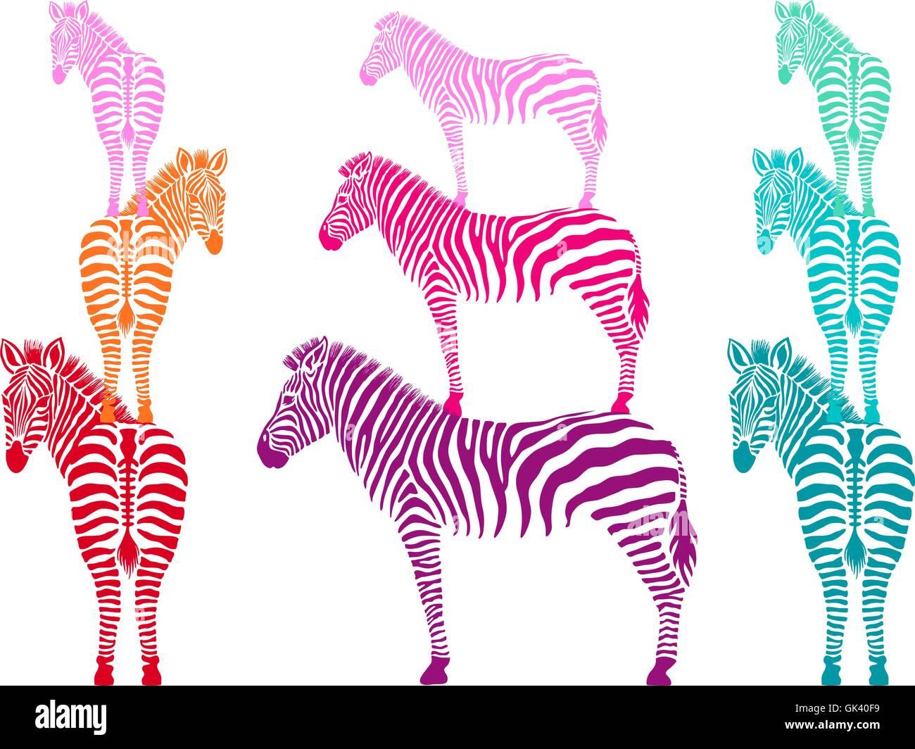 Les zèbres colorés debout, côté et vue de dos, vector illustration Photo Stock