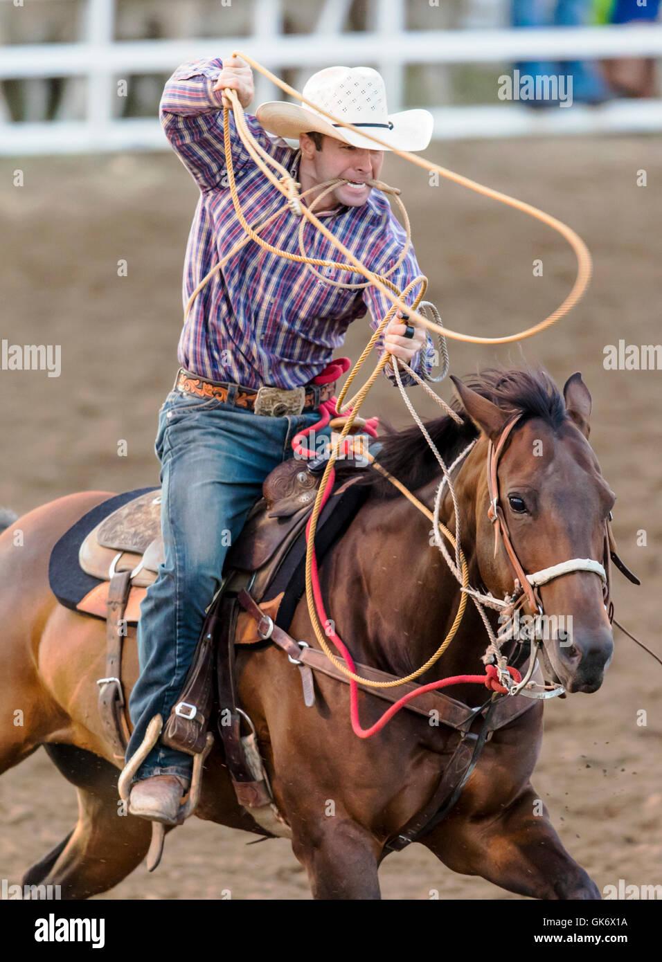 Rodeo Cowboy à cheval en compétition dans Calf roping, retenue ou ...