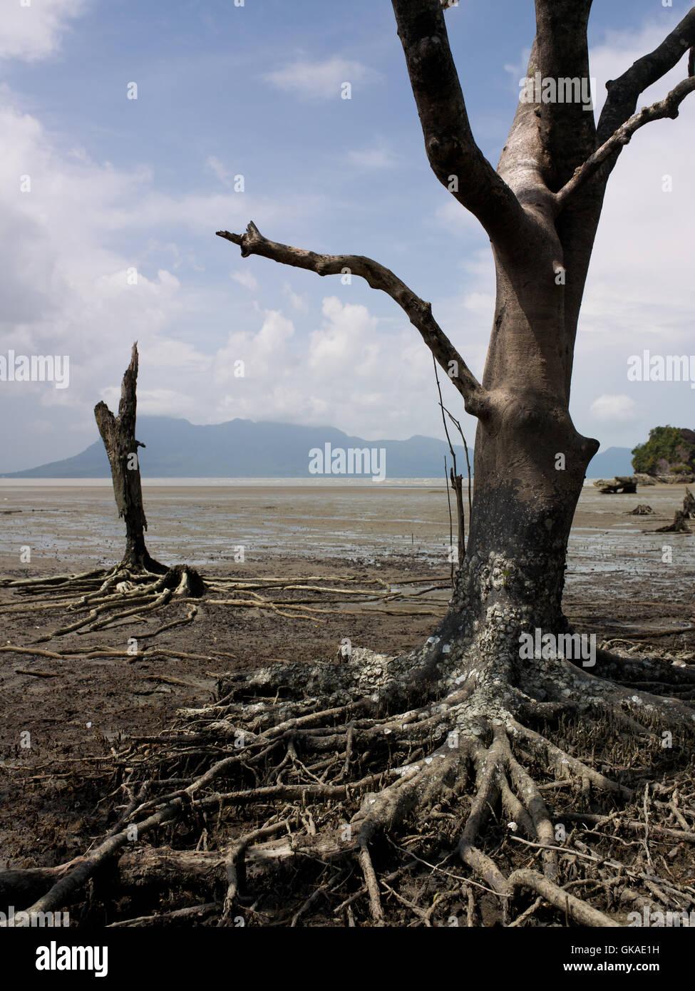 Environnement Environnement l'écosystème Photo Stock