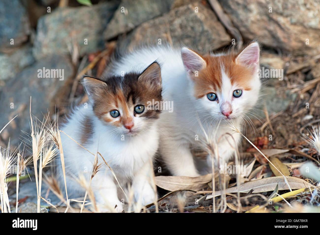 Deux chatons assis en plein air côte à côte et looking at camera Photo Stock