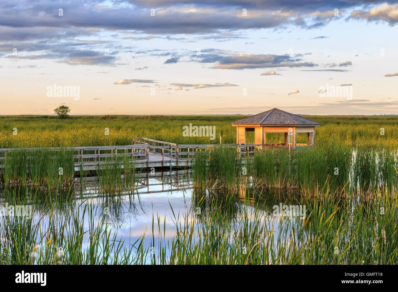 L'observation de la faune, aveugle Le marais Oak Hammock, Manitoba, Canada. Photo Stock