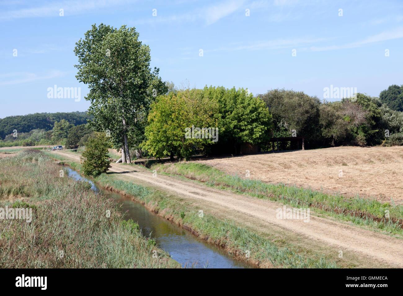 Une grande vue d'une partie de la 'Barthes de Monbardon (Soorts Hossegor - Landes - France) avec un drain Photo Stock