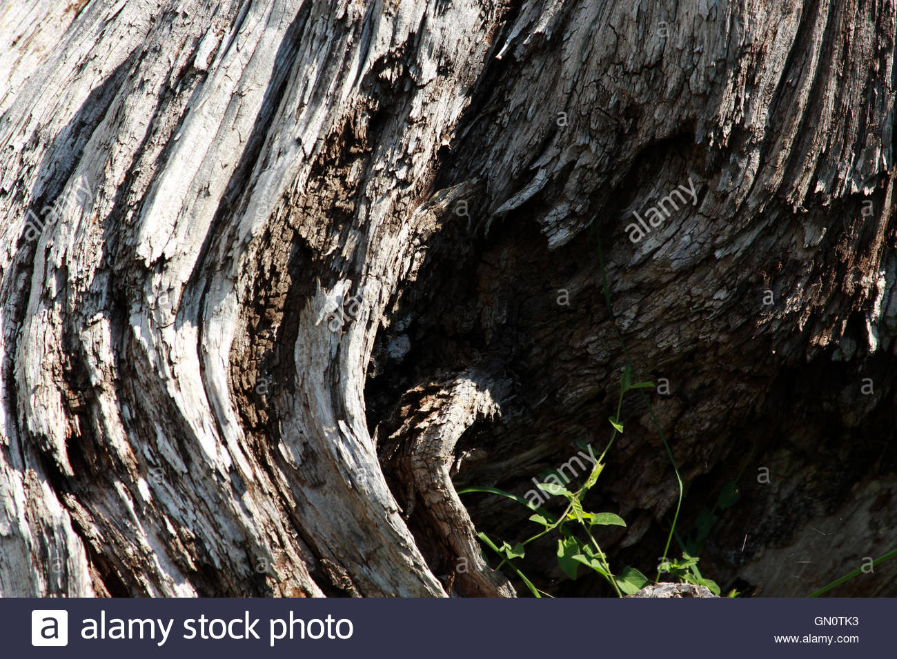 Vieux tronc close-up Photo Stock