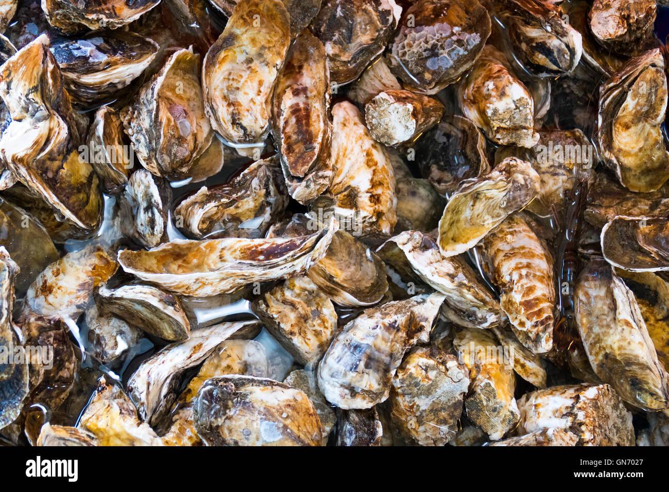 De grandes quantités d'Huîtres Photo Stock