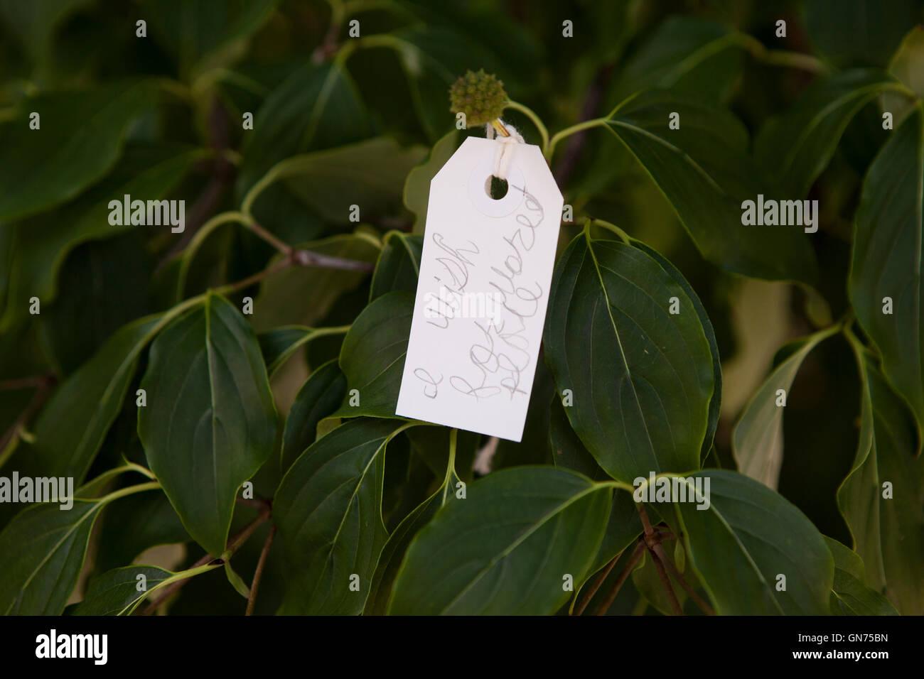 Tag avec message sur Yoko Ono arbre des désirs - USA Banque D'Images