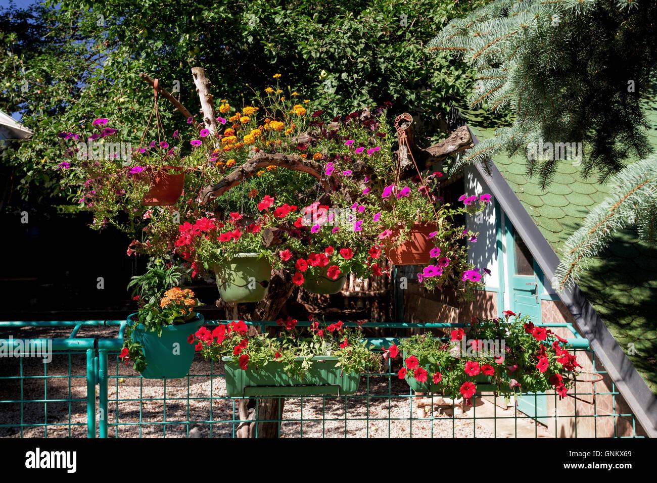 Beau jardin d\'été, les arbres design avec des pots et fleurs pétunia ...