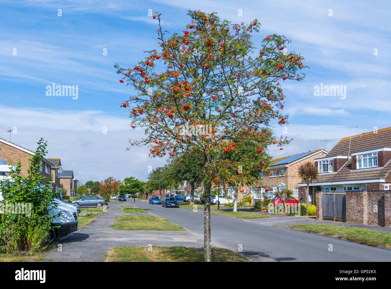 Rue résidentielle dans l'été en Angleterre, Royaume-Uni. Photo Stock