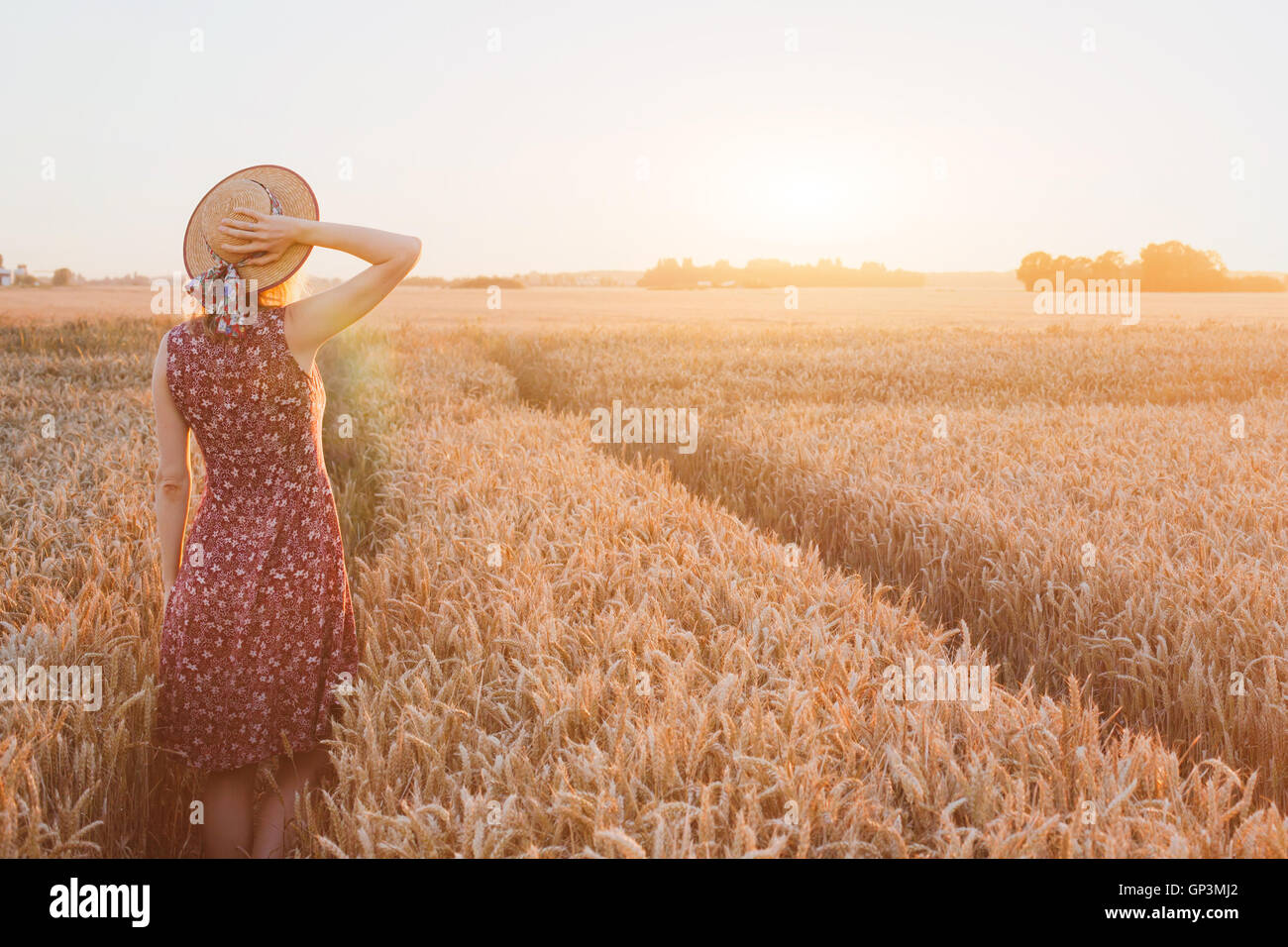 Heureux l'été jeune femme en champ de blé par le coucher du soleil, la rêverie, belle arrière Photo Stock