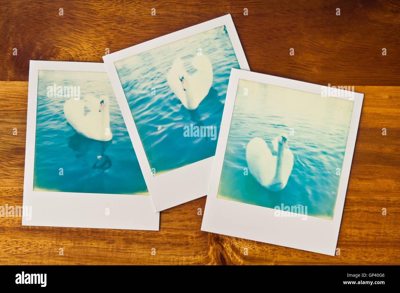Polaroids photos Photo Stock