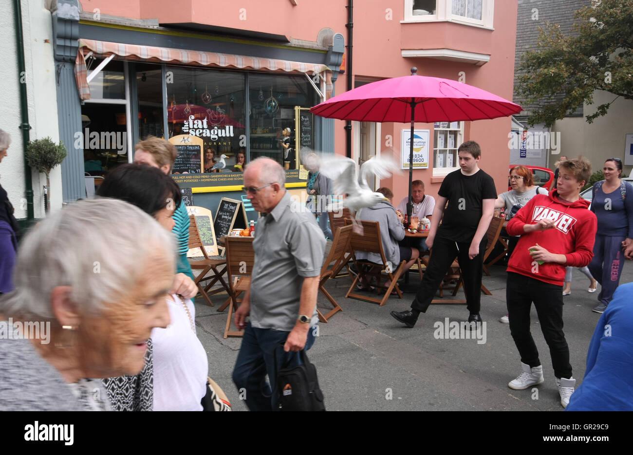 Une mouette s'envole après avoir mangé les rebuts d'une table de restaurant à Tenby, Photo Stock