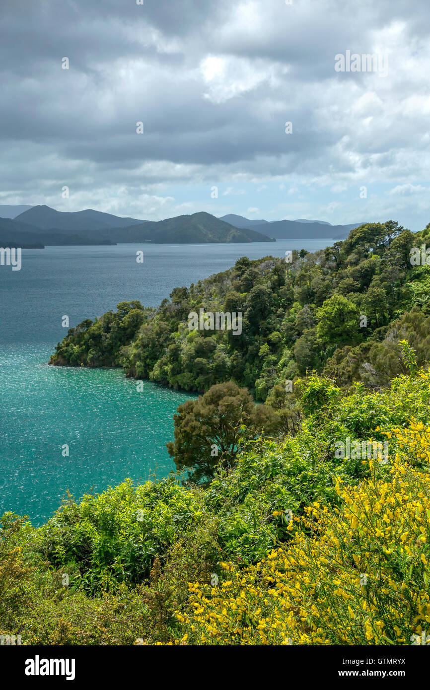 Avis de Queen Charlotte Sound sur l'île du Sud, Nouvelle-Zélande Photo Stock