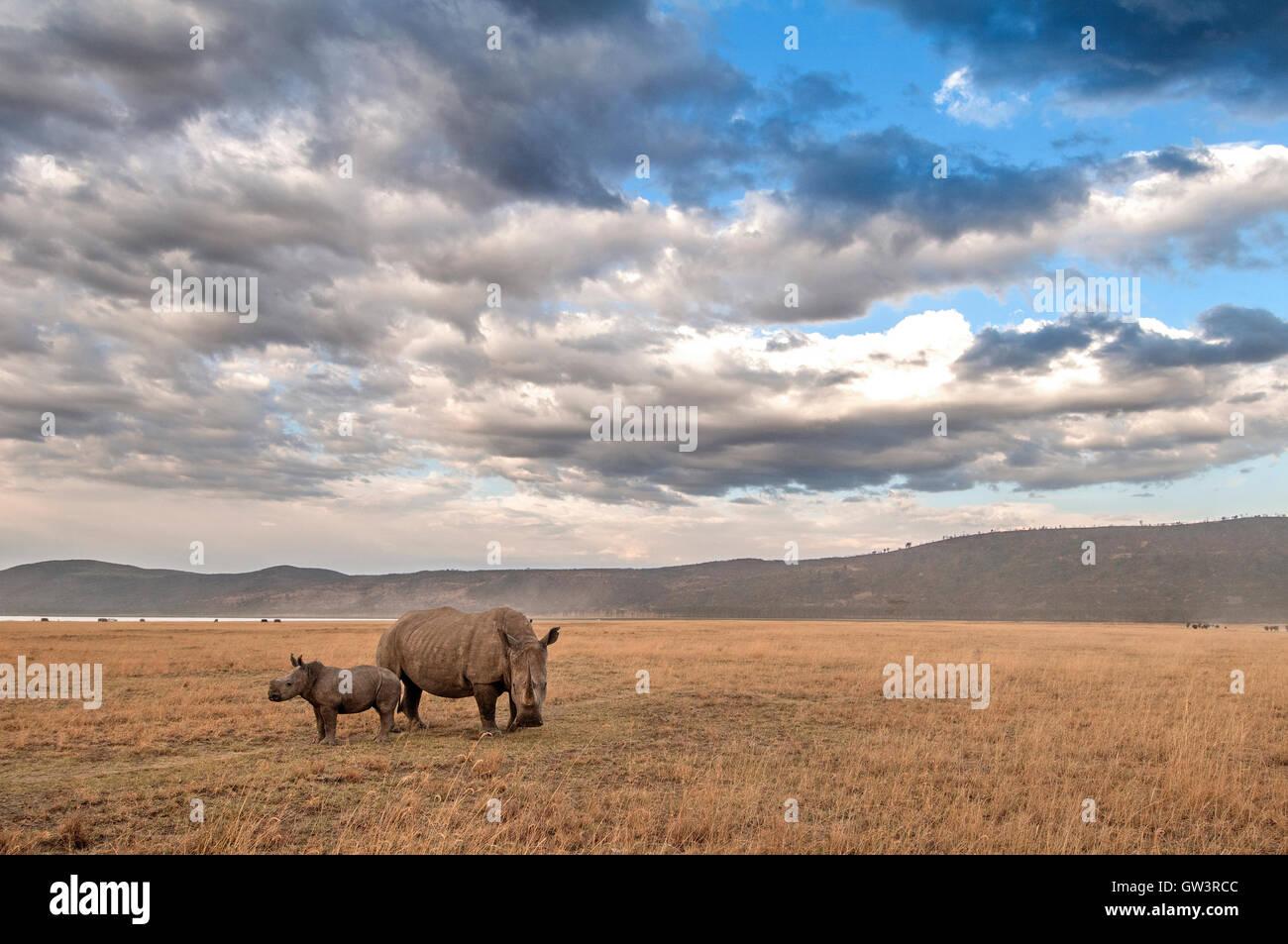 Une mère rhinocéros et son bébé dans le parc national du lac Nakuru, au Kenya. Photo Stock