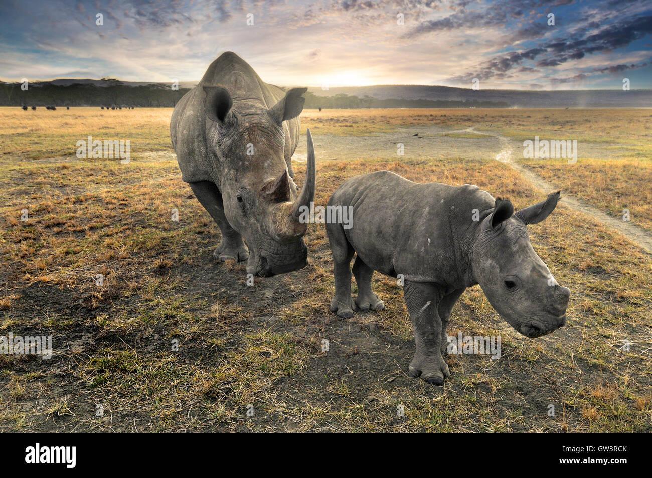 Mère et Bébé rhinocéros au coucher du soleil Photo Stock