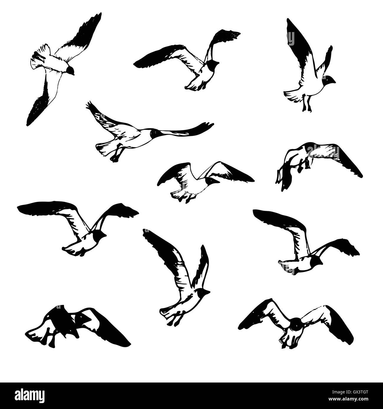 Mouettes Volantes Dessiné à La Main Croquis Illustrations