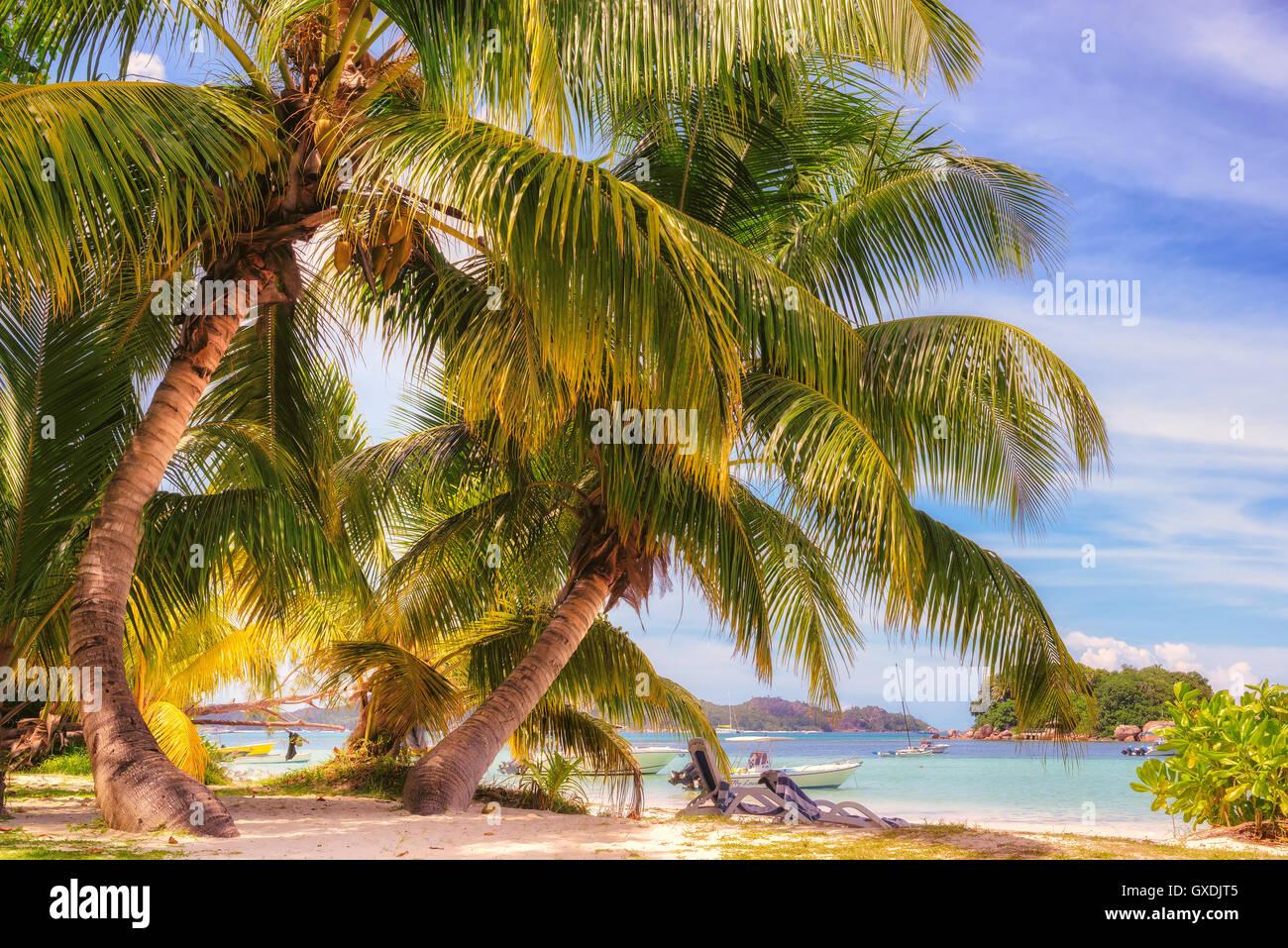 Plage sur l'île tropicale. Photo Stock