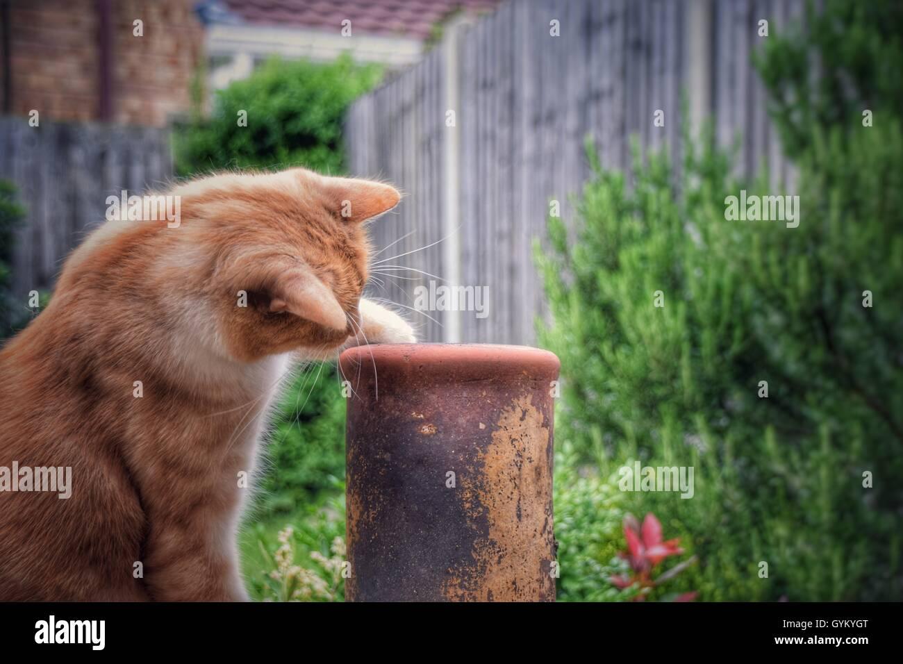 Chat curieux à la recherche de la buse en chimenea Photo Stock