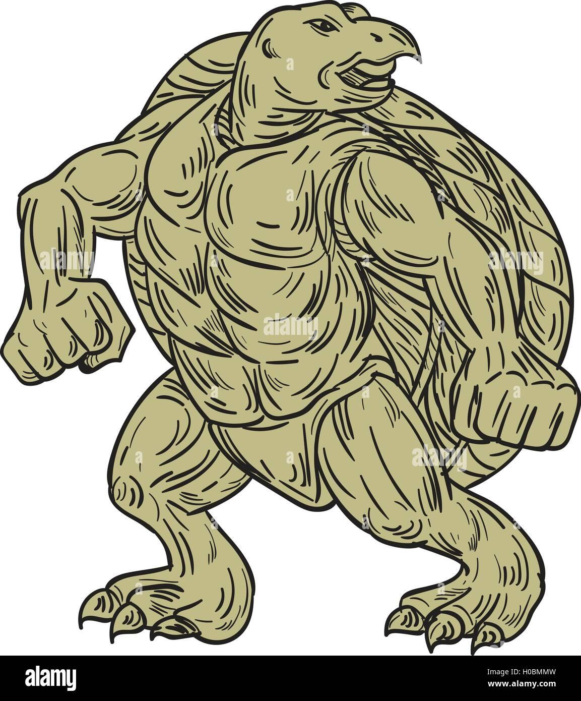 Style Croquis Dessin Illustration D Une Tortue De Kemp Lepidochelys
