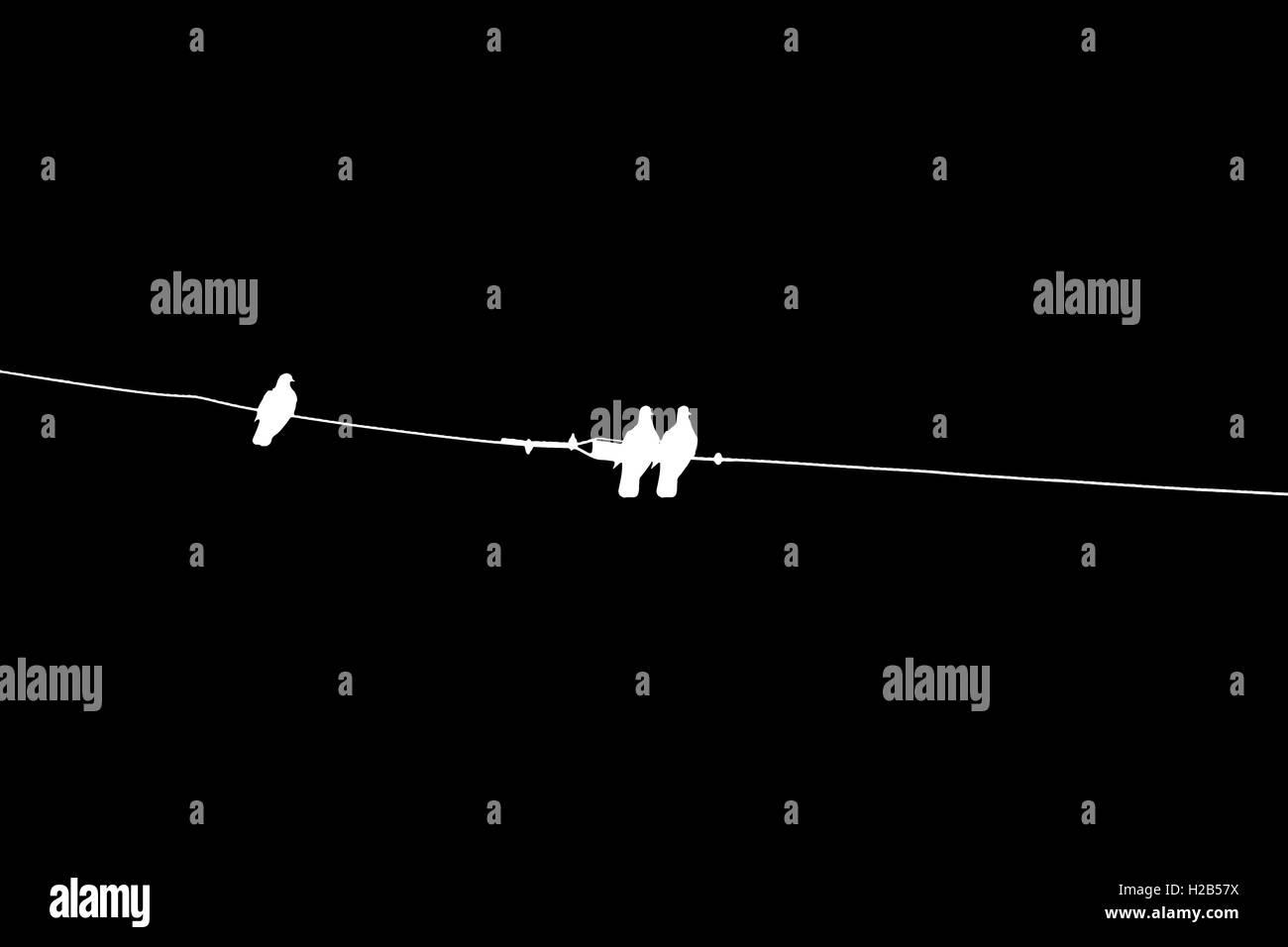 Dove, blanc, calme, isolé, vector, l'arrière-plan, colombes, volant, noir, Photo Stock