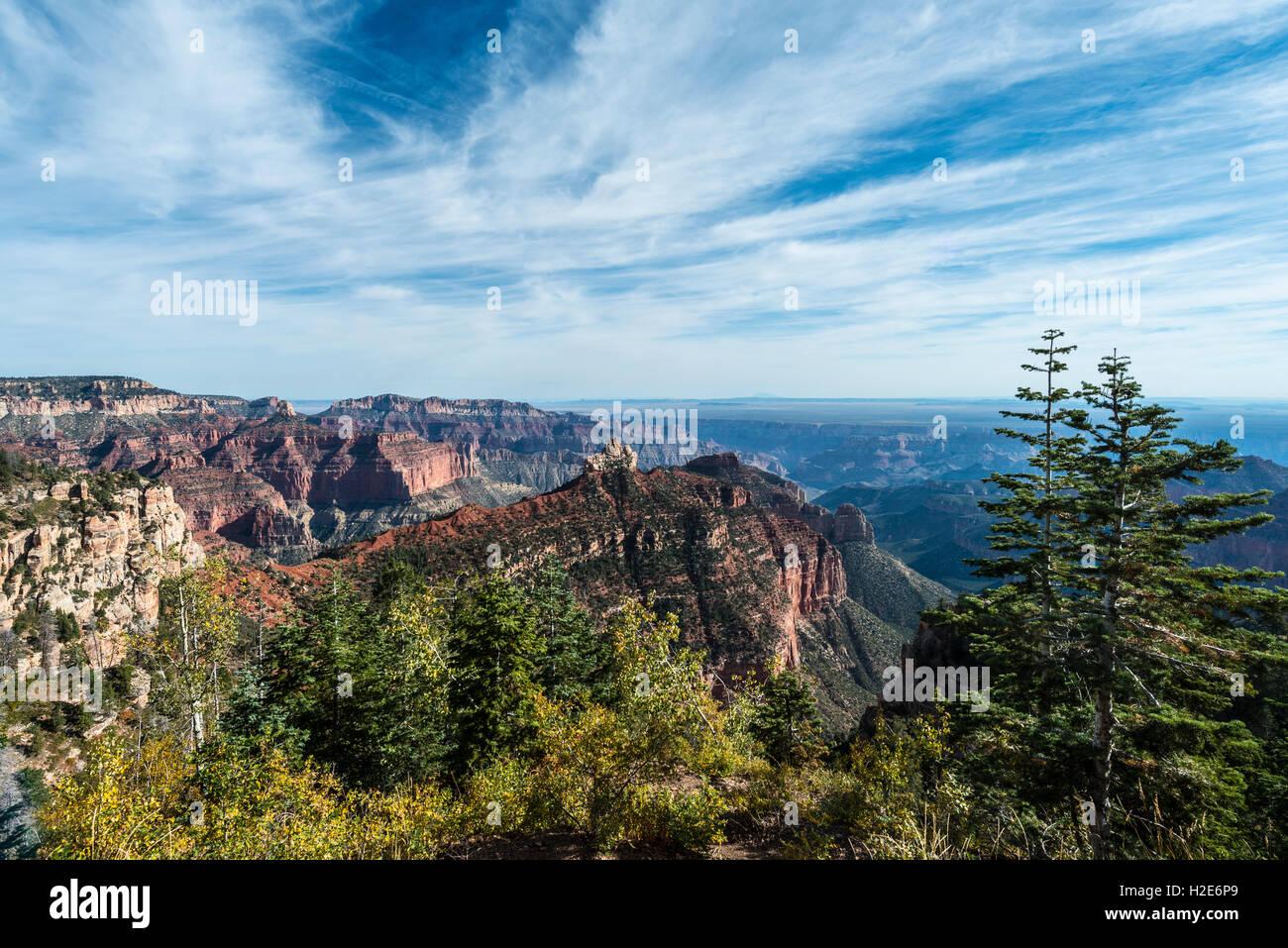 Vue de North Rim, le Parc National du Grand Canyon, Arizona, USA Photo Stock