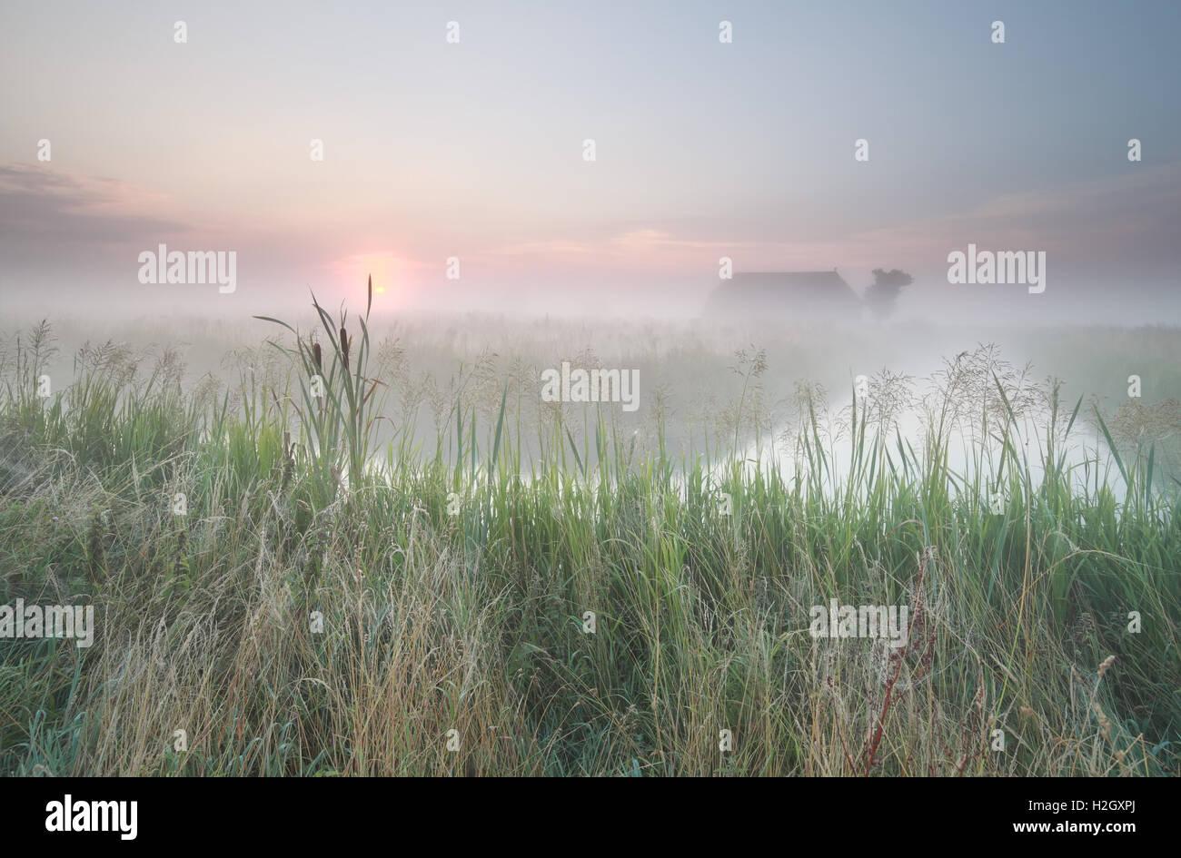 Misty néerlandais au lever de terres agricoles Photo Stock