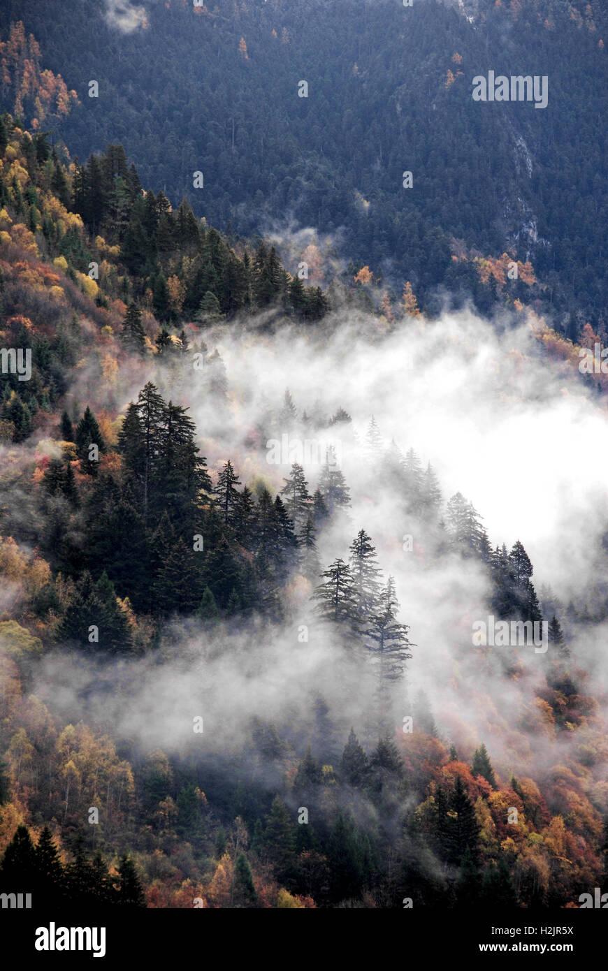 La brume s'attarde sur l'alpine d'arbres dans le Parc National de Jiuzhaigou, Chine. Photo Stock
