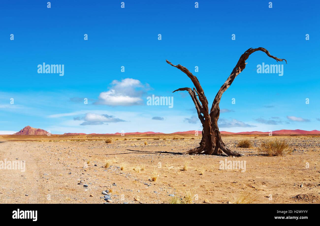 Arbre mort dans le désert de Namib, Namibie Photo Stock