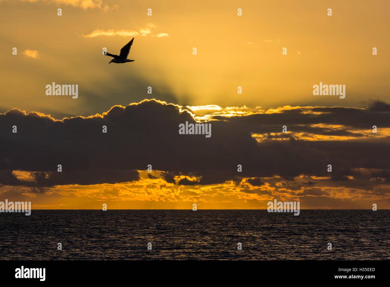 Lever du soleil près de Punta Colorado, île de San Jose, Baja California Sur, Mexique Photo Stock