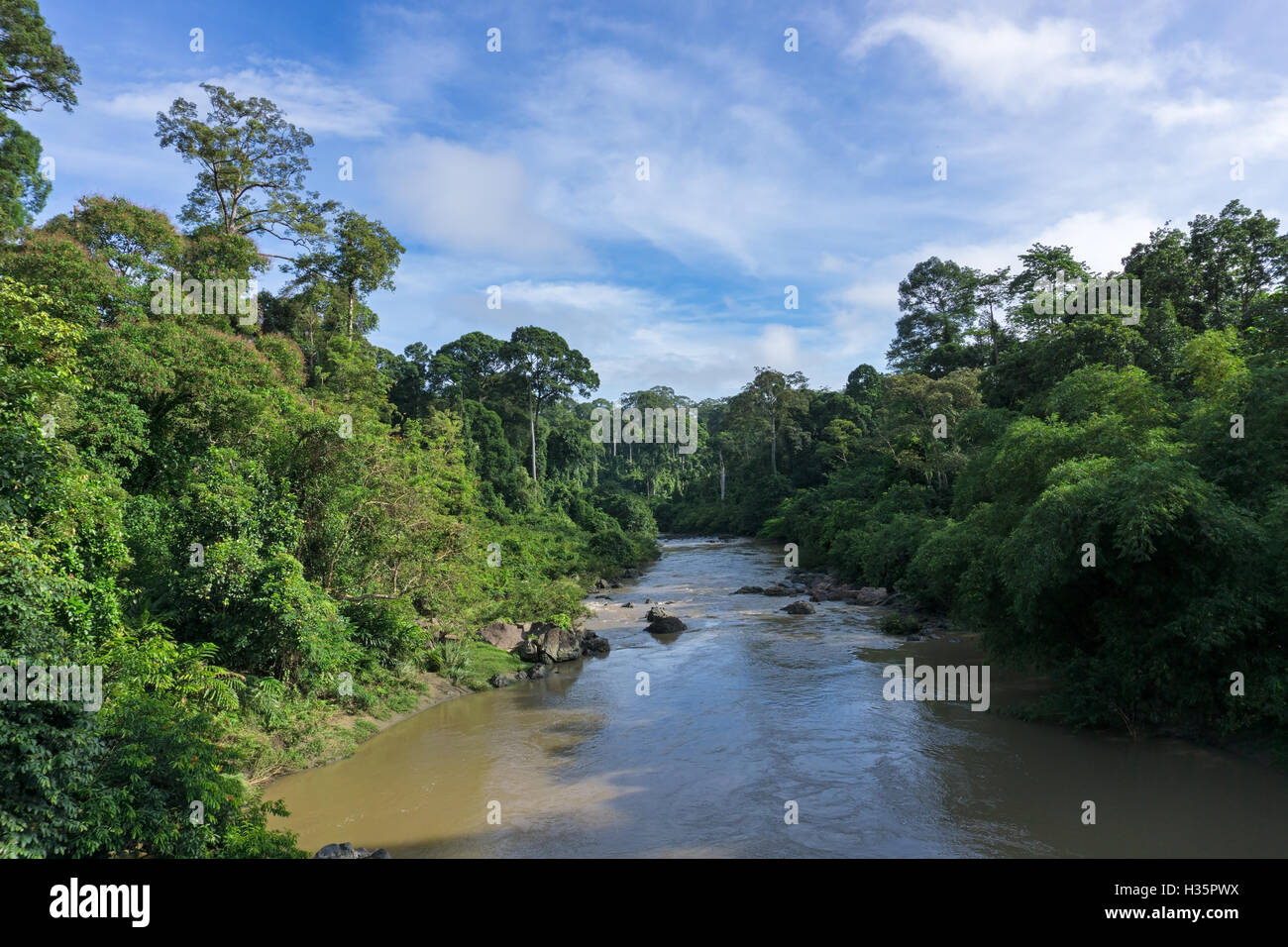 Rivière Segama flanqué de la plaine non perturbées dans les forêts de diptérocarpacées Photo Stock