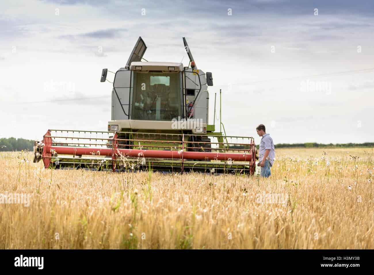 Inspection de l'agriculteur à la moissonneuse-batteuse dans le champ de l'orge biologique Photo Stock