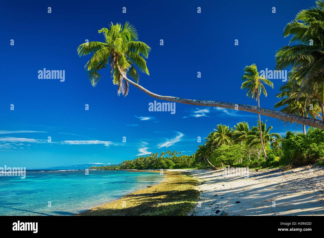 Tropical Beach sur le côté sud de l'île Samoa avec de nombreux palmiers Photo Stock