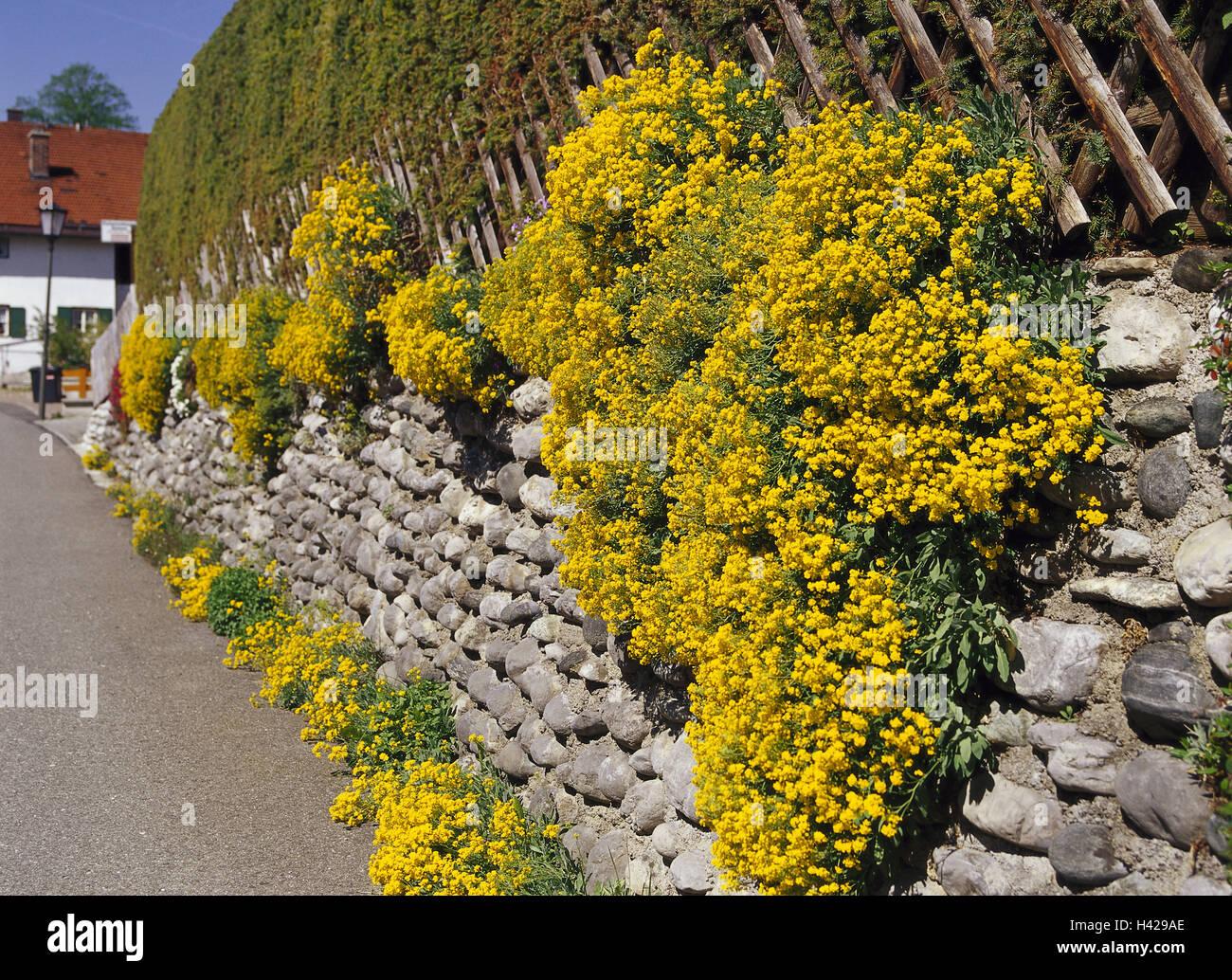 Mur en pierre, fleurs, fleurs, jaune, l\'Allemagne, la Haute ...
