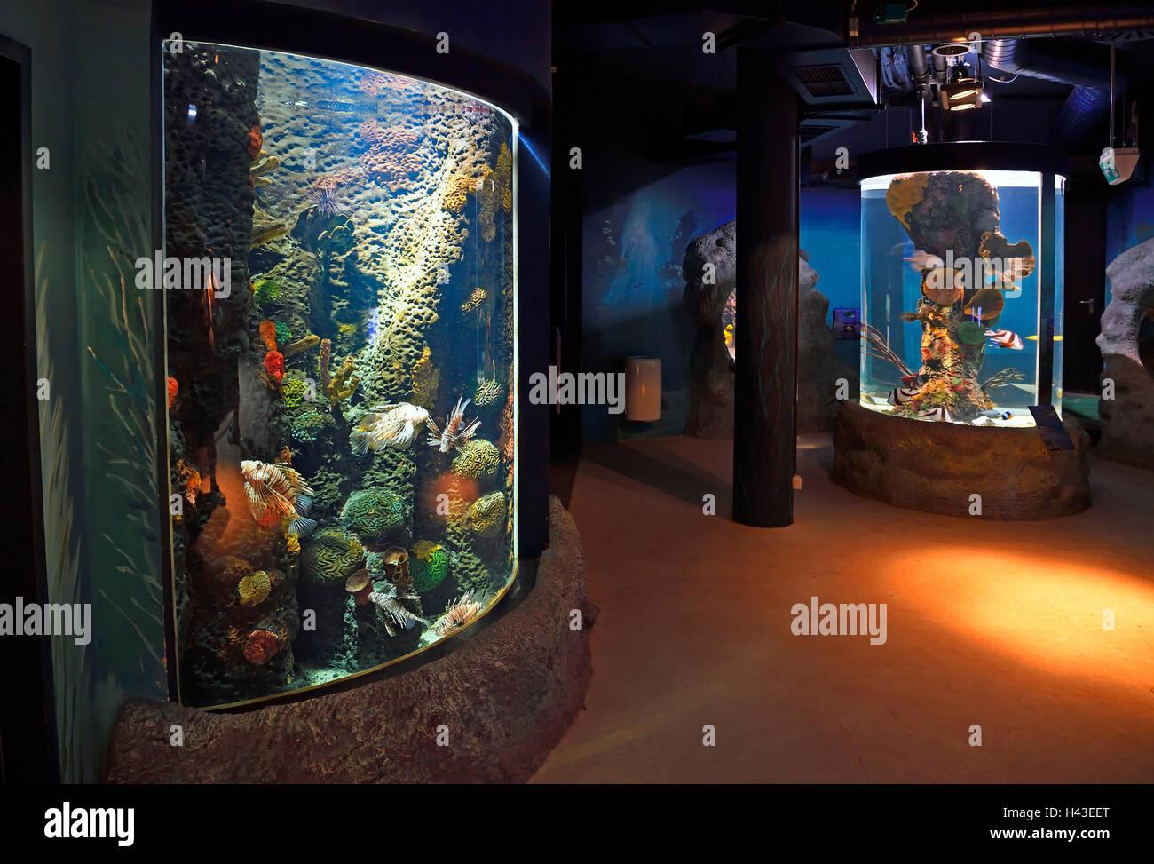 Intérieur de l'Aquarium, Westerland Sylt, Sylt, au nord de l'archipel Frison, Frise du Nord, Schleswig Photo Stock