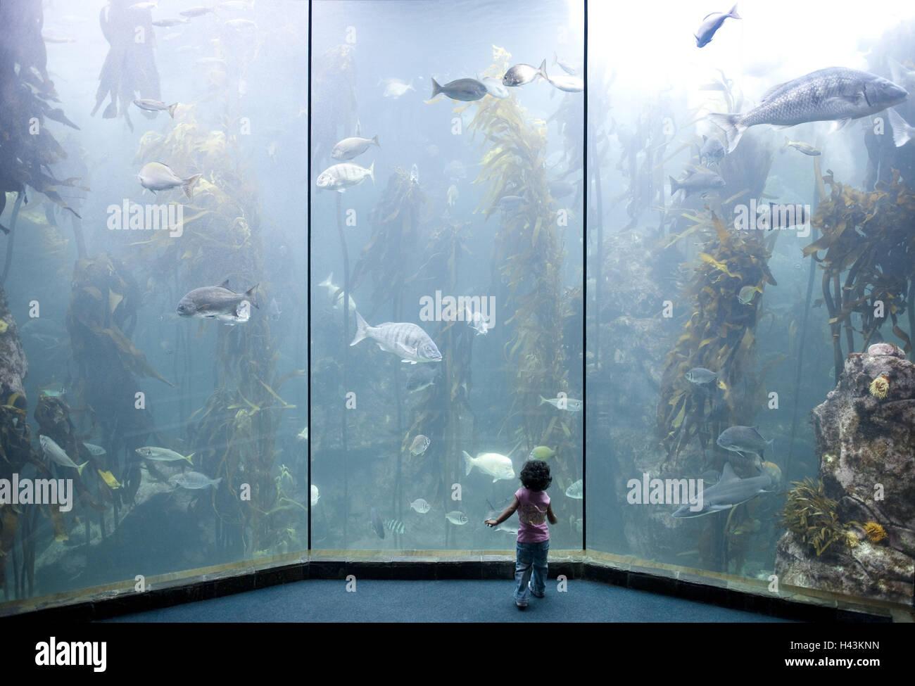 L'Afrique du Sud, Capetown, False Bay, l'Aquarium des deux océans, les visiteurs, Photo Stock