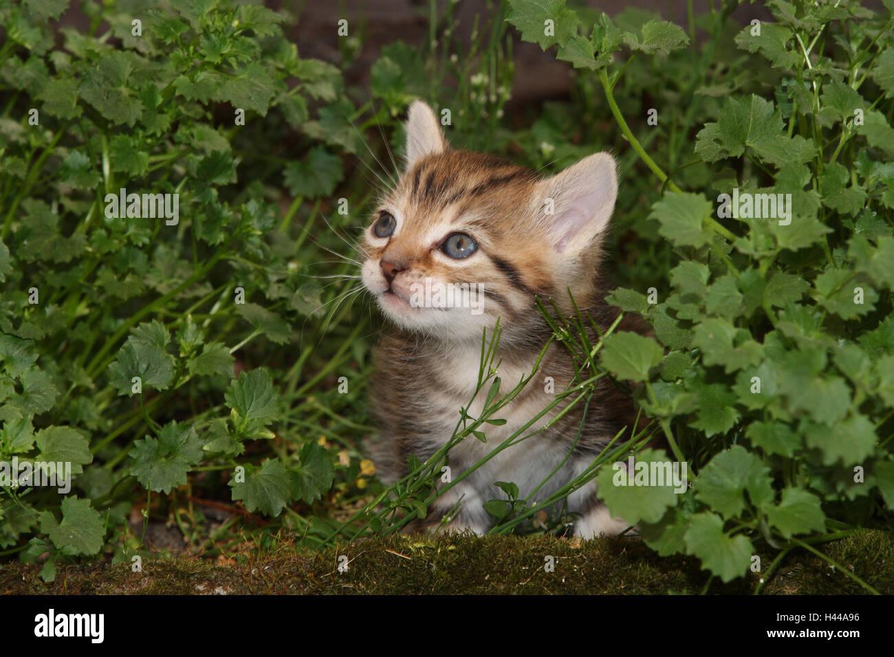 Cat, jeune, s'asseoir, pré, jardin, animaux, mammifères, animaux domestiques, petits chats, félidés, Photo Stock
