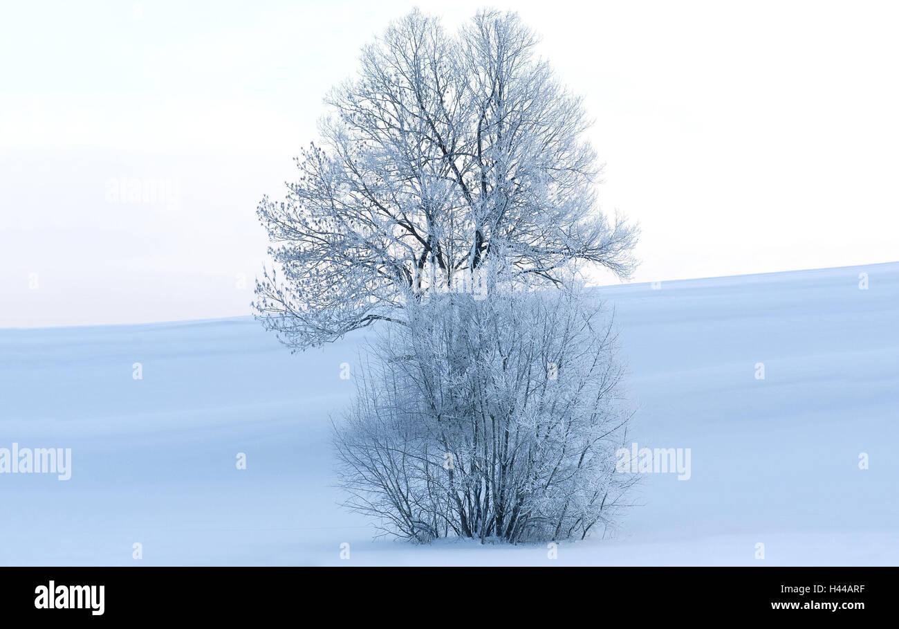 Paysage d'hiver, arbre, arbuste, gelée blanche, lumière du matin, l'hiver, l'Allemagne, Berlin, d'arbres à larges feuilles, la couleur de l'humeur, blanc, bleu, neige, gel, froid, froid, la nature, la solitude, la glace, l'échéance, personne, à l'hiver, hiver, gelé, neige-couvert, surface de neige, paysages, matin d'hiver, horizon, jour d'hiver, le silence, matin, l'atmosphère, la saison, Banque D'Images