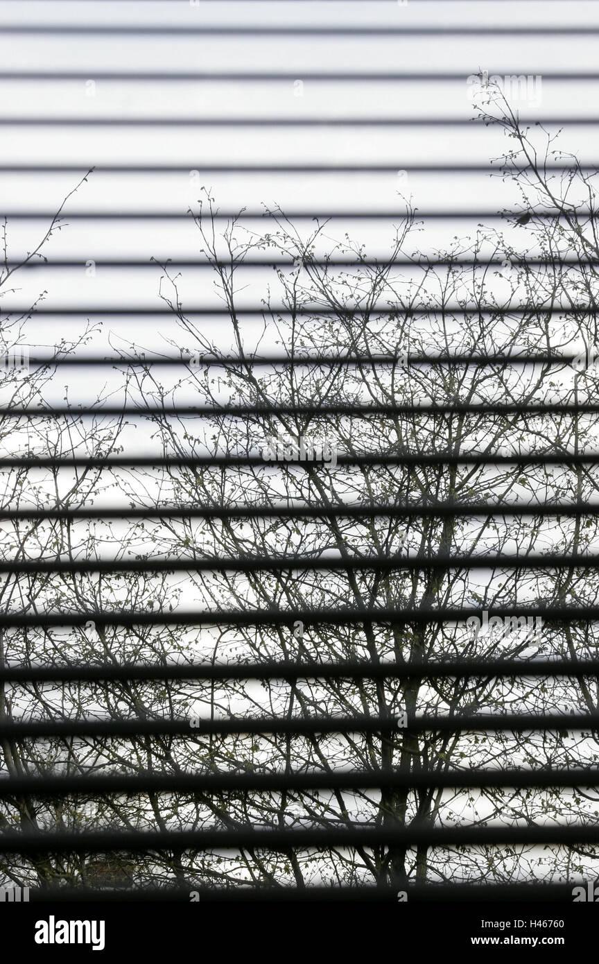 Fenêtre, jalousie, vue, arbre, monotone, gloomily, gris, décourageant, de la fenêtre, ouverte, ouverte, Photo Stock
