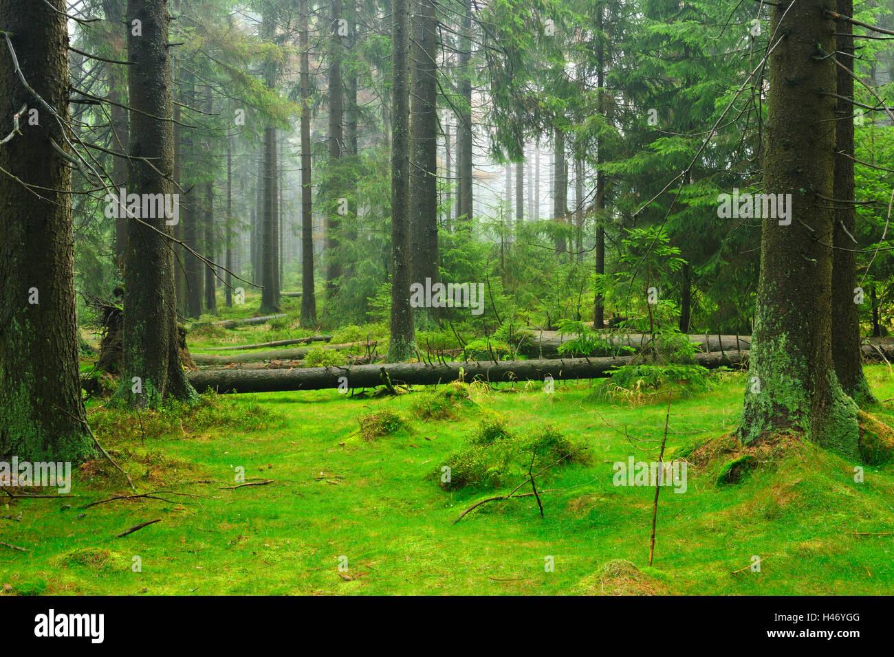 La nature sauvage intacte dans le Harz, Nature Park, Allemagne Photo Stock