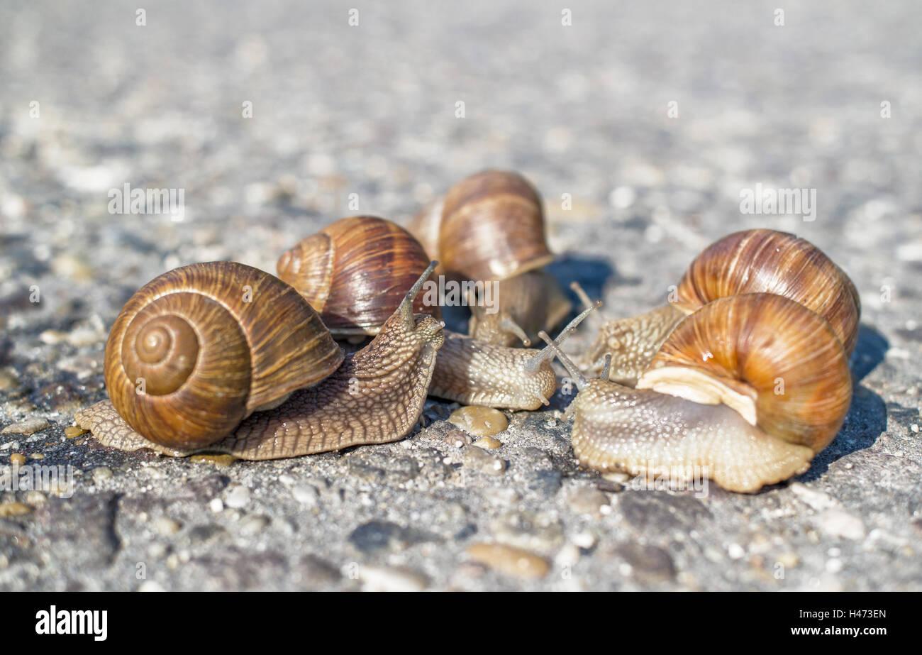 """Résultat de recherche d'images pour """"photo d'escargots groupes"""""""