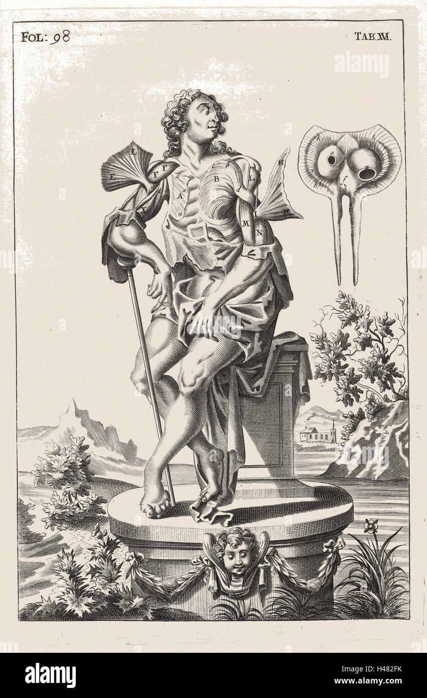 Illustration anatomique montrant les muscles de la partie supérieure du corps Photo Stock