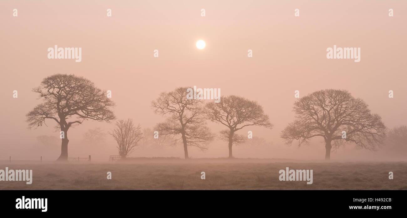 Lever du soleil sur un matin d'hiver brumeux dans la campagne du Devon, Angleterre. L'hiver (mars) 2014. Photo Stock