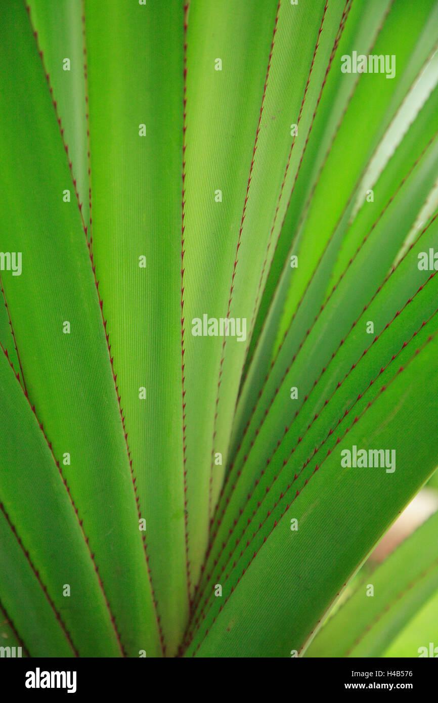 Plante, feuilles, diversifiée, Close up, irrégulières, striée, medium close-up, échantillon, Photo Stock