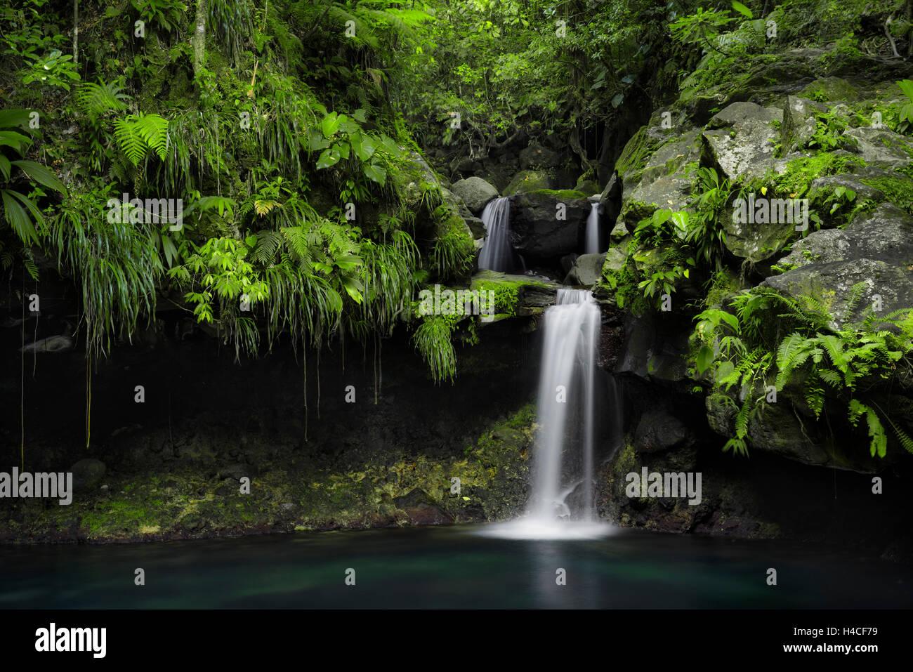 La Guadeloupe, la France, les Caraïbes, jungle, forêt, cascade, piscine, turquoise, vert, feuilles, tropical, Photo Stock