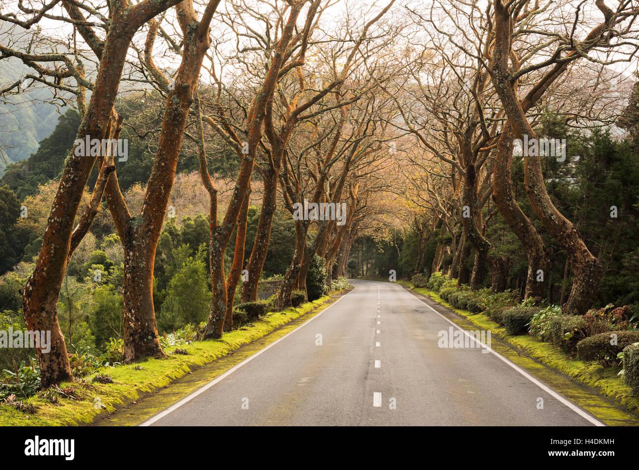 Avenue avec Furnas, Sao Miguel, Açores, Portugal Photo Stock