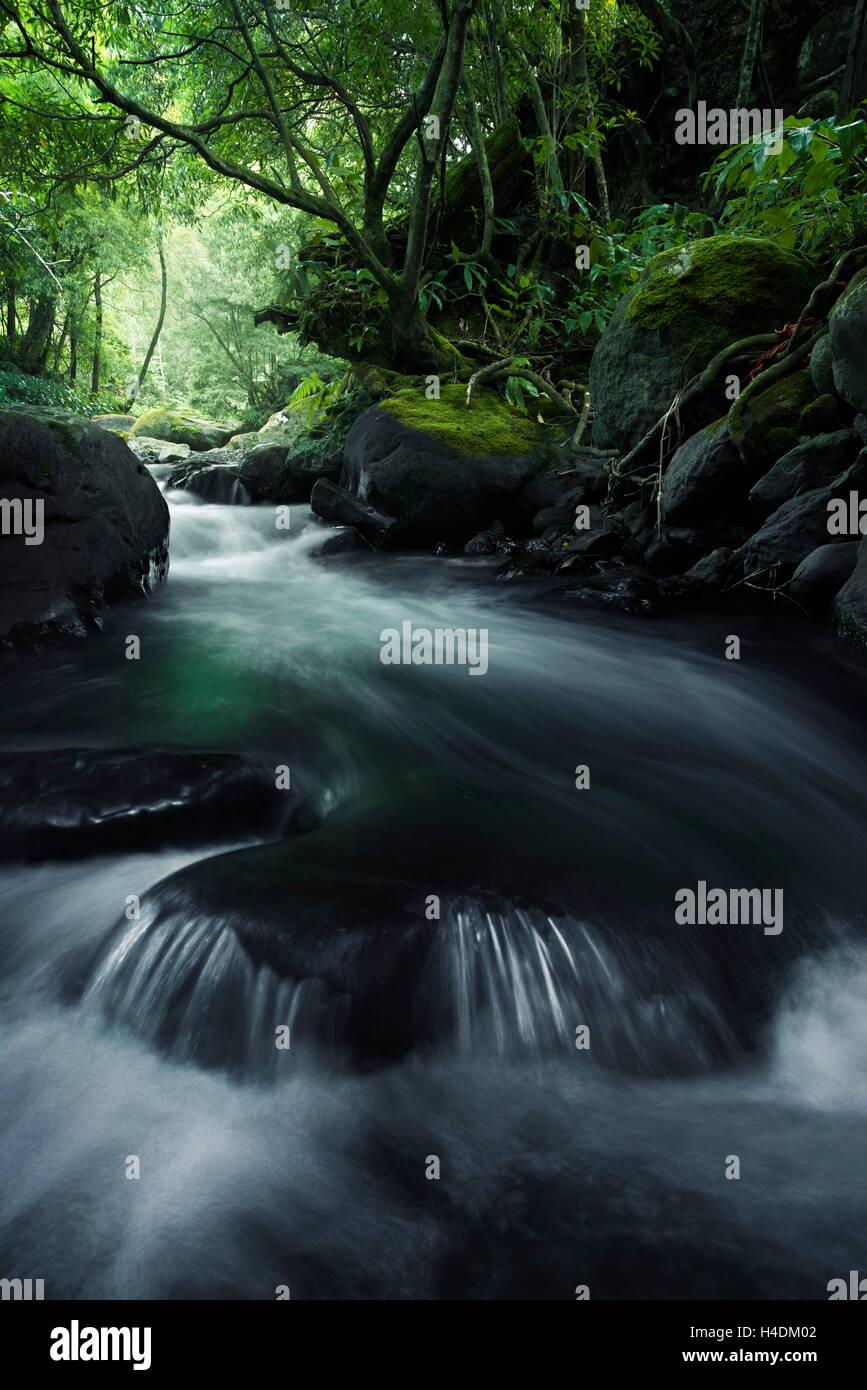 Dans la jungle sur Sao Miguel, Açores, Portugal Photo Stock