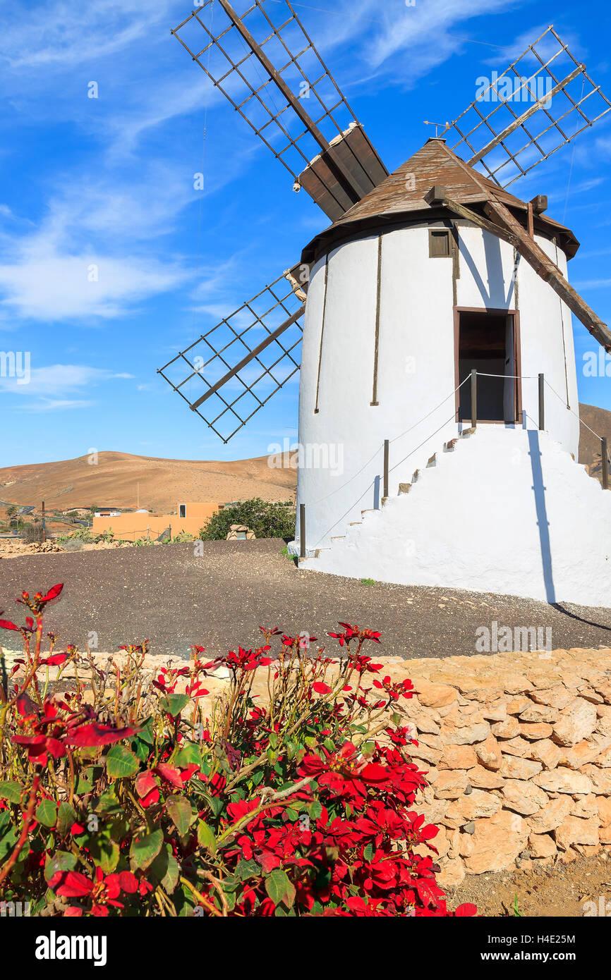 Ancien moulin à vent traditionnel rouge avec des fleurs en premier plan dans village Tiscamanita, Fuerteventura, Banque D'Images