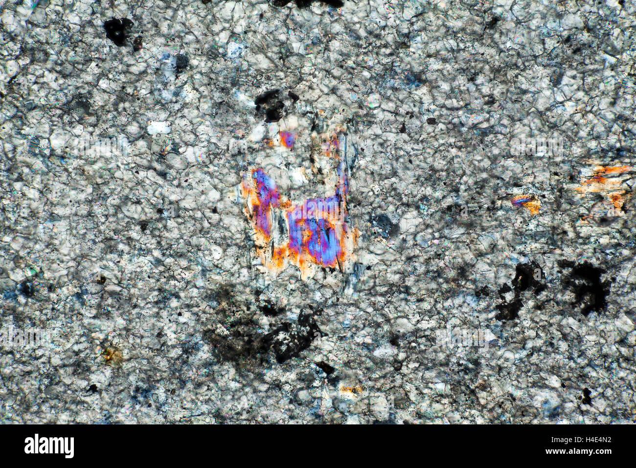 Quartz-mica-schiste, le Loch Linnhe, galet, Ecosse, Royaume-Uni. Microphotographie en lumière polarisée. Banque D'Images