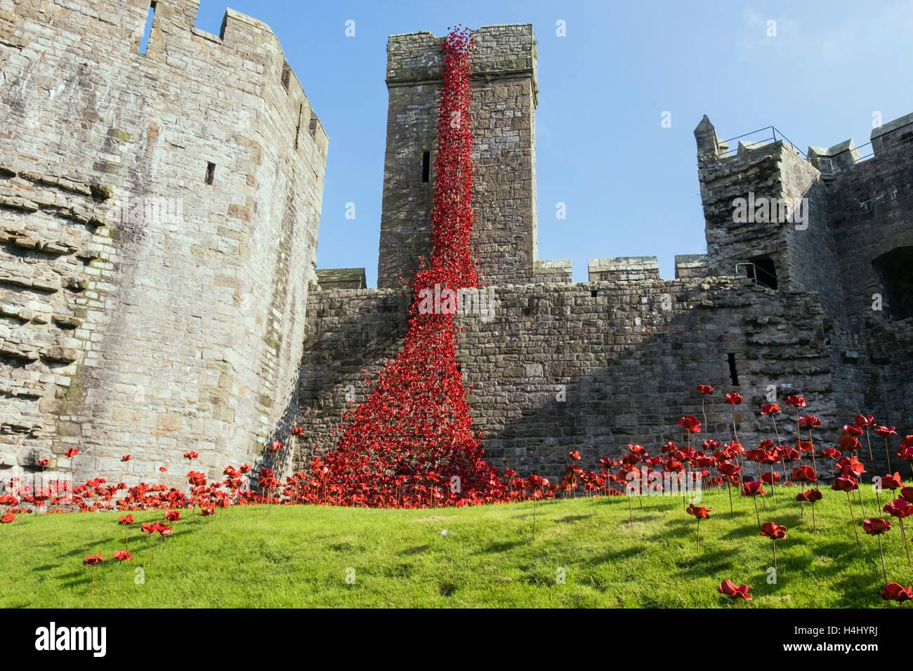 Fenêtre pleurant art sculpture céramique de coquelicots rouges dans les murs du château de Caernarfon. Photo Stock