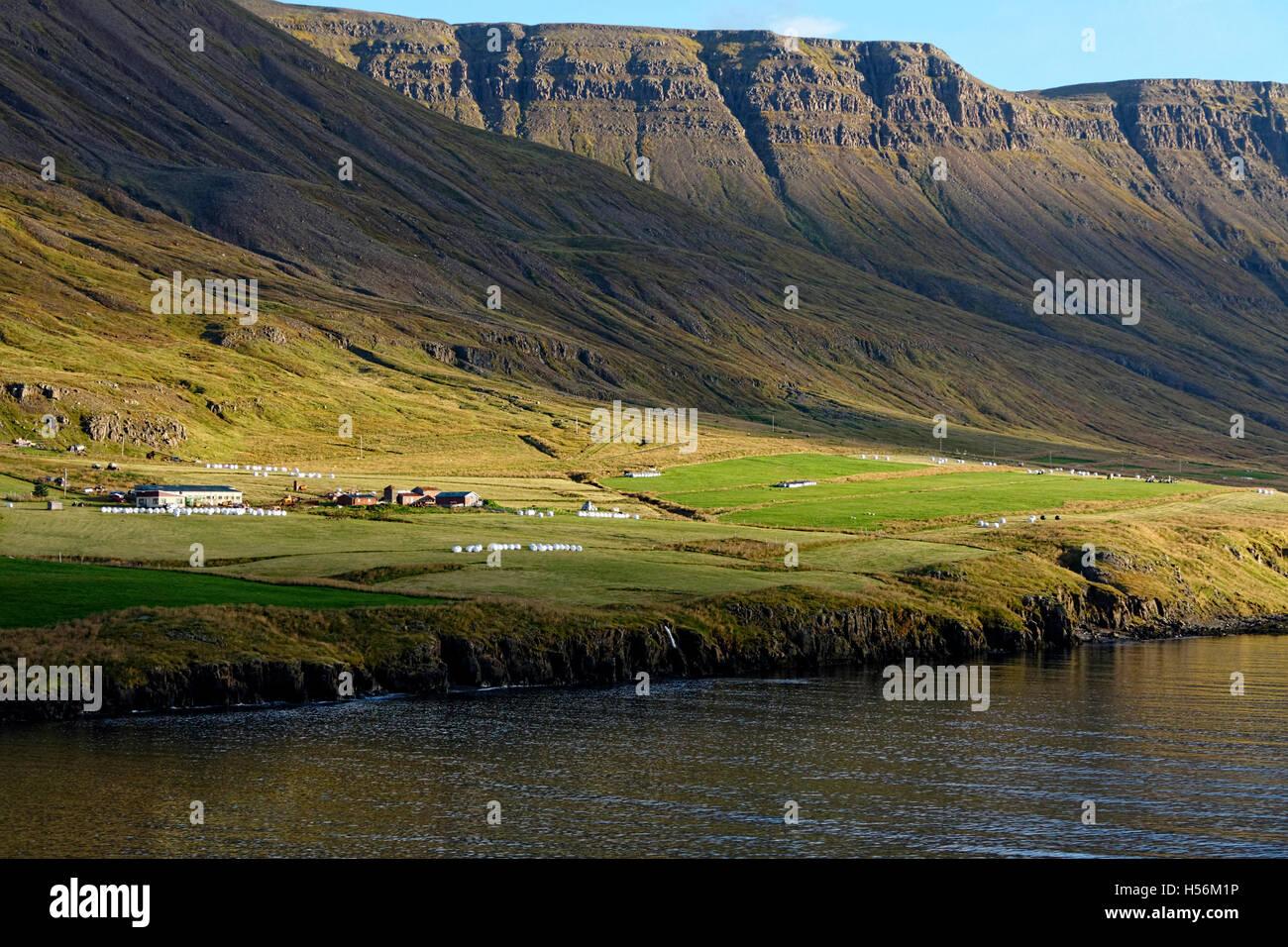 Ferme dans le Seyoisfjord, l'Islande, de l'Atlantique Nord, Europe Photo Stock