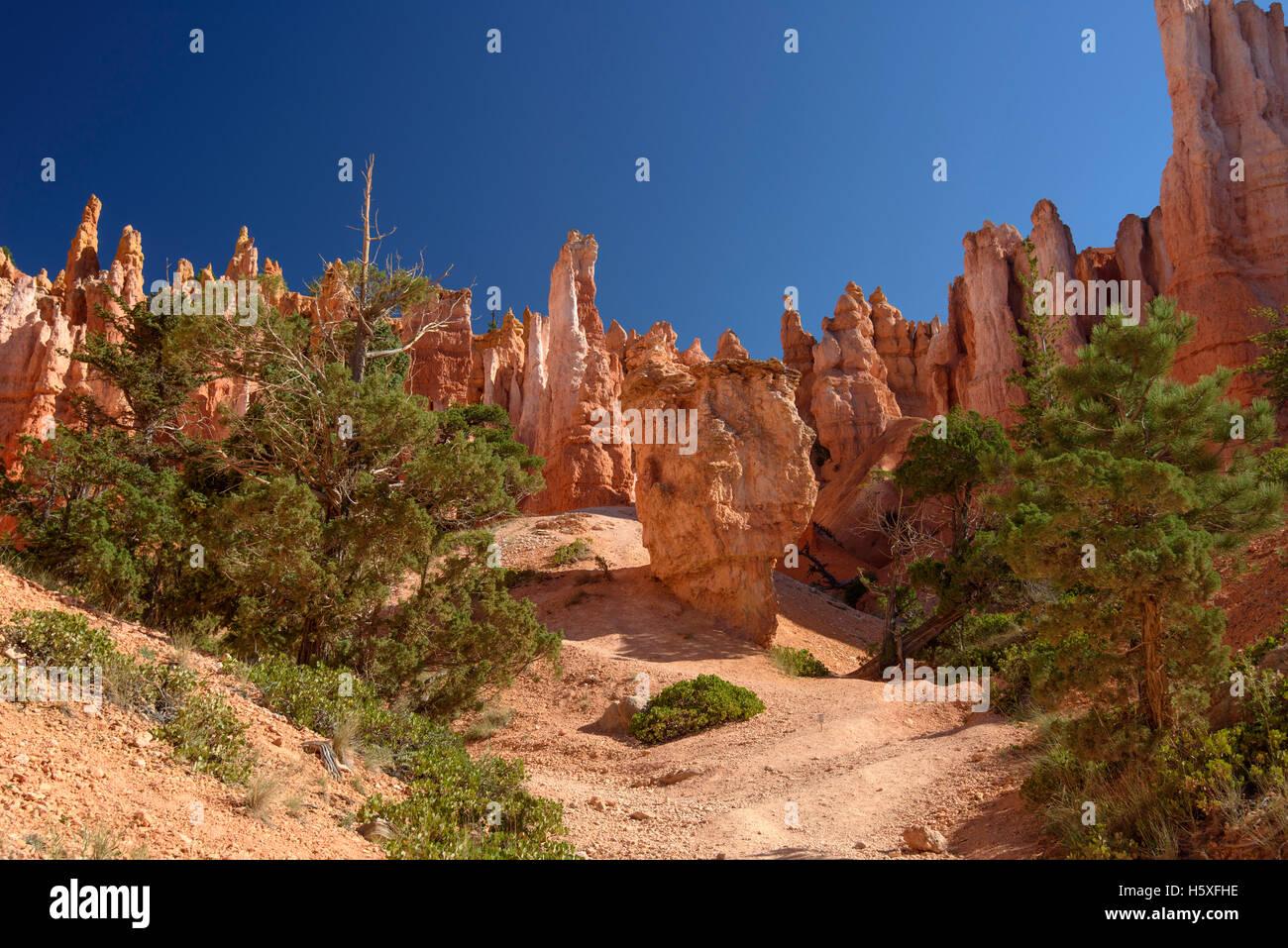 La vue magnifique, le Parc National de Bryce Canyon, Utah, situé dans le sud-ouest des États-Unis. Photo Stock