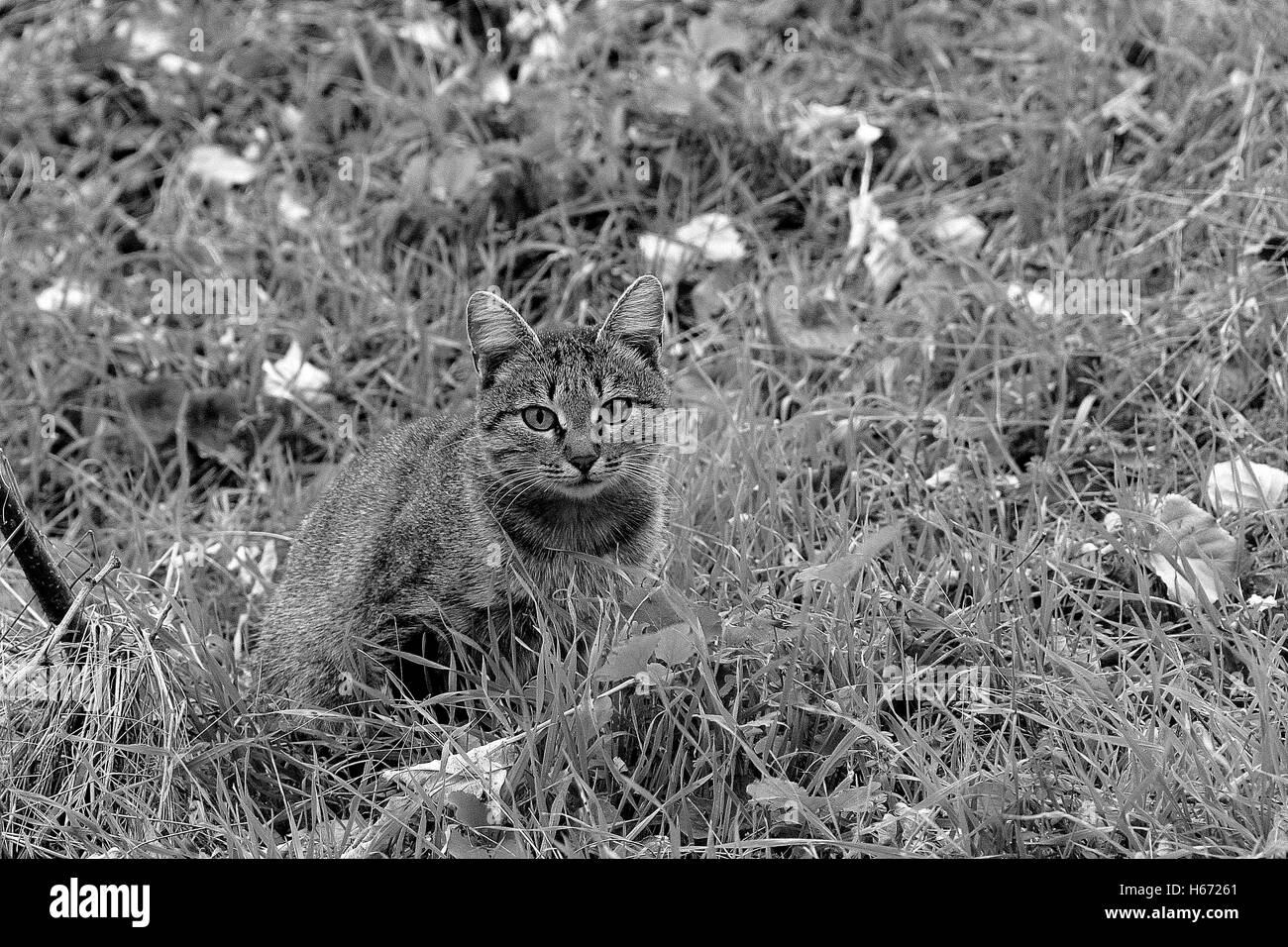 Chat dans le déguisement. Photo Stock
